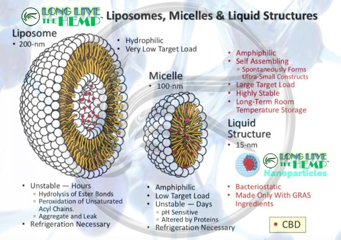 Liposome vs. Micelle vs. LONG LIVE THE HEMP Nanoparticles Diagram