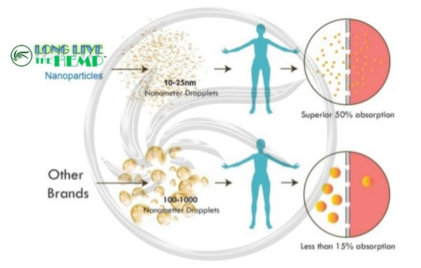 Long Live The Hemp Nanoparticles vs Liposomes